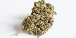 Cannabis website marketing SEO